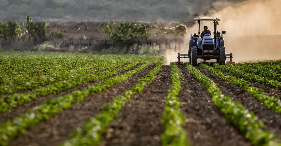 Image is a crop field being worked on by a farmer driving a tractor. Image is in full colour